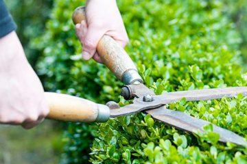 Rasen & Gartenpflege